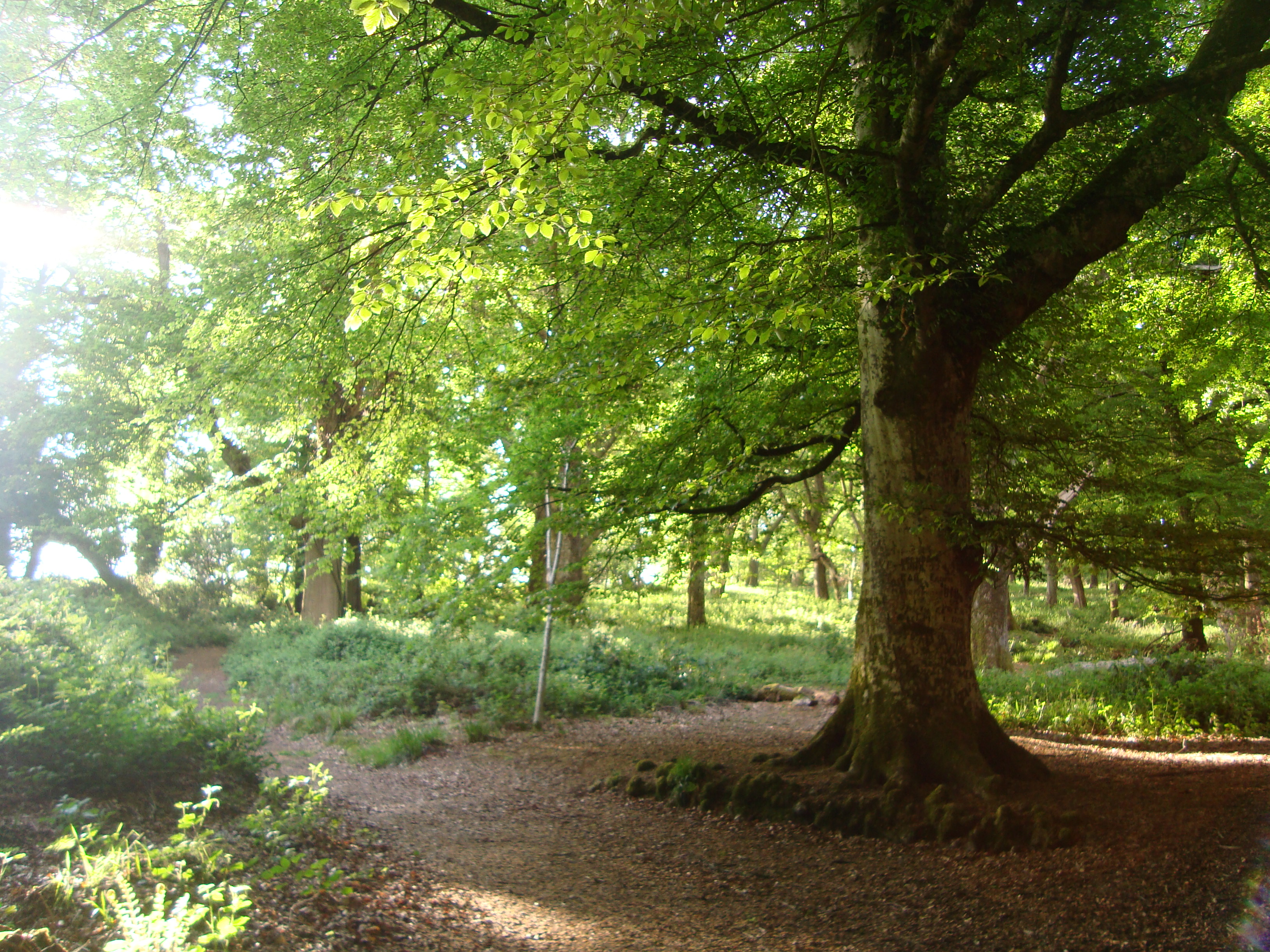 Tomnafinnoge Woods - Tinahely.ie