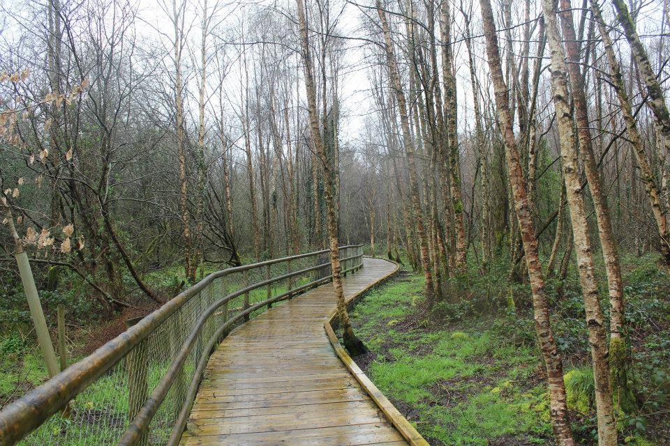 Tomnafinnoge Woods 2